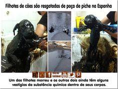 Mural Animal: Filhotes de cães são resgatados de poça de piche na Espanha