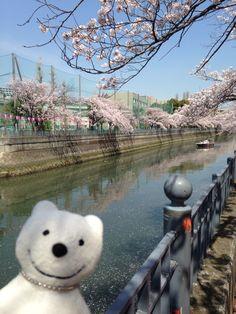クマ散歩:大岡川を品行方正なクマが上る7 (南太田-井土ケ谷) The Bear took a walk up the Ooka River!♪☆(^O^)/