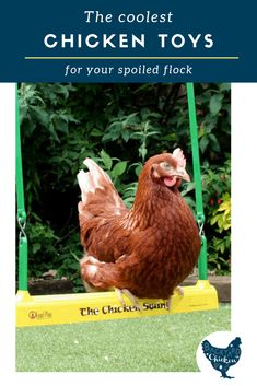 The Coolest Chicken Toys for your Spoiled Flock Chicken Swing, Chicken Garden, Chicken Coop Plans, Raising Backyard Chickens, Keeping Chickens, Toys For Chickens, Pet Chickens, Funny Cat Videos, Funny Cats