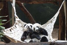 Panda Pals