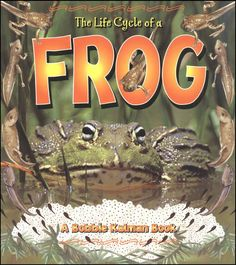 The Life Cycle of a Frog (Bobbie Kalman Books (Paperback)): Describes how frogs develop from eggs to tadpoles to froglets to adult frogs. Welcome To Preschool, Life Cycle Stages, Lifecycle Of A Frog, Sequencing Cards, Spinner Card, Rainbow Resource, Pond Life, Literacy Activities, Kindergarten Worksheets