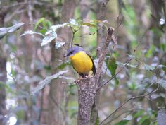 Native Australian Bird on one of our bush walks