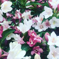 Vienna: It feels like #summer #springishere #flowers Spring Is Here, All Over The World, Vienna, Feels, Flowers, Plants, Summer, Summer Time, Flora