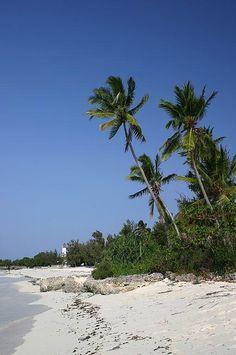 White beaches, palm trees and turqoise water, Zanzibar, Tanzania