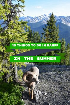 10 THINGS TO DO IN BANFF IN THE SUMMER #ScoutsCanada #OutdoorAdventures