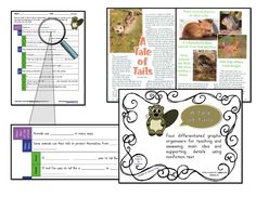 Bundle of FIVE articles with Graphic Organizers for Main Idea/Detail $12.00! Get 5 activities for the price of 4!