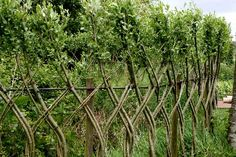 "willow fencing at La Roche Jagu"" title=""jagu-fence450″ width=""450″ height=""300″ class=""size-full wp-image-456″ />"