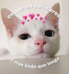 Romantic Memes, Fairy Tail Love, Cute Love Memes, Cute Posts, Love Phrases, Spanish Memes, Cute Disney Wallpaper, Bff Quotes, Wholesome Memes
