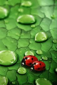 Ladybugs. My favorite. Learning that they bring good luck