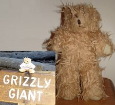 """LOST in Yosemite, Mariposa Grove USA REWARD!  On 20th September 2013 this 7inch tall, scruffy bear wearing """"Teddy on tour 2012"""" t-shirt withan Alcatraz badge was lost in Yosemite /Mariposa Grove USA . REWARD OFFERED. Desperate hoping someone has found this very precious bear. Contact: https://www.facebook.com/lesley.reed.9 or https://www.facebook.com/TeddyBearLostAndFound"""