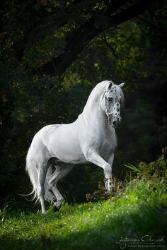 Katarzyna Okrzesik has an eye for creating engaging equine portraits. She travels to stables far & wide to photograph these majestic horses Most Beautiful Horses, All The Pretty Horses, Animals Beautiful, Cute Animals, Beautiful Gorgeous, Cute Horses, Horse Love, Horse Photos, Horse Pictures