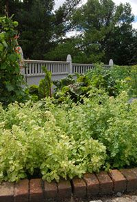 Herbs : Vegetables : Yard and Garden : University of Minnesota Extension
