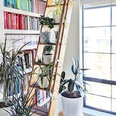 The process of creating a built-in home library with custom shelves and 18 feet of book storage complete with a vintage ladder. Home Library Decor, Library Ladder, Amethyst Geode, Rose Quartz Crystal, Beautiful Space, Beautiful Homes, How To Make Rose, Vintage Ladder, Diy Crystals