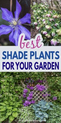 These flowering perennials and shrubs are perfect for your shady garden that needs some color to brighten it up. Find out our picks for the best plants that grow in shade. #fromhousetohome #gardening #gardenideas #shade #plants #shadeplants Best Plants For Shade, Shade Loving Shrubs, Shade Shrubs, Cool Plants, Plants Under Trees, Full Sun Plants, Shade Perennials, Flowers Perennials, Shade Plants Container
