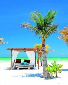 Isla Holbox, Mexico : Source : http://botanicalexotique.com/