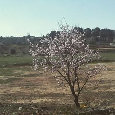 Invierno en valencia señores. #unapizcadehogar #inviernera #almendros #betera