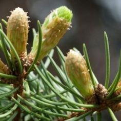 muguri de pin Green Beans, Health Fitness, Medical, Vegetables, Nature, Plants, Food, Travel, Beauty