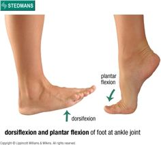 Dorsiflexion and plantar flexion