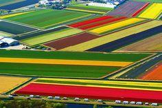 Keukenhof, na Holanda: a terra das tulipas | #Holanda, #Jmj, #Keukenhof, #LugaresDoMundo