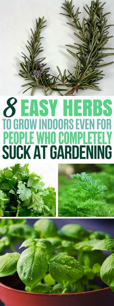These 8 easy to grow herbs are great for people looking for ways to flavor their cooking or for DIY &; These 8 easy to grow herbs are great for people looking for ways to flavor their cooking or for DIY […] gardening apartment