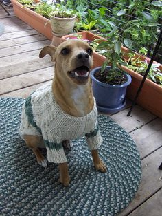 This is a completely resizable puppy/dog sweater pattern. I hope you find it a useful jumping off point for making lots of sweaters for your favorite pooch! =)