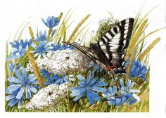 butterfly and flowers ~ artist Marjolein Bastin