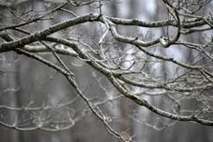 DIY Iced Winter Branches for Pennies! (or Free!)