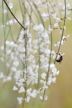 Laube Leal | Pájaros, insectos y la miel en los labios