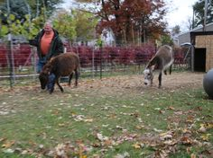 Mike and Pam McGroarty with their Miniature Donkeys Finnegan and Fergus.