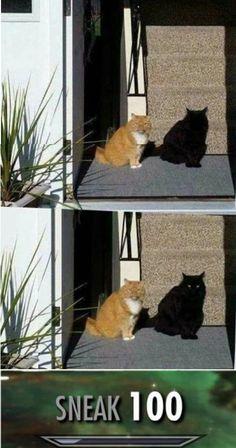Looks like some Skyrim Bethesda cat. Funny Gaming Memes, Funny Animal Memes, Cute Funny Animals, Funny Games, All Meme, Stupid Funny Memes, Funny Relatable Memes, Haha Funny, Funny Humor