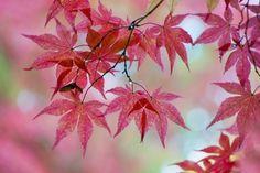 Autumn Aura by Jacky Parker