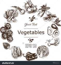 Vector illustration sketch of vegetables Tomato, Peas, broccoli, asparagus, artichoke, cabbage, eggplant, avocado, arugula, basil, herbs