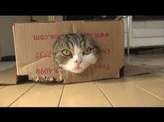 Maru. Japan's most famous cat.