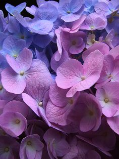 Hortensia _ Explore position  231 on Friday, October 17, 200… _ By  ROQUE141 _ Flickr - Photo Sharing!