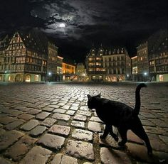 "Nocturnal cat"" In to the night ...."