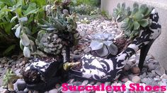 Use an old pair of shoes as a planter for a Succulent Garden.