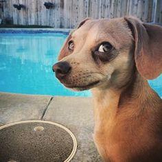 Este perro que simplemente te mirará así hasta que te pongas protector solar. | 21 Perros que están juzgando las cosas que haces en la vida