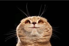 8 datos curiosos sobre los gatos :) | Mascotas