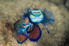 Poisson multicolore, à Palaos, sanctuaire marin, Pacifique