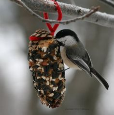 Peanut butter pinecone with birdseed for the birds during the winter time. A good project for the kids.