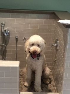 <p>Frankie Feldman was especially fond of the walk-in tiled washing station with dog-level faucets and sprayers, so there's no danger of getting hurt while jumping over the side of the tub, or of hismom pulling a muscle while trying to heft him into the bath.<i>(Photo courtesy Lisa Johnson Mandell)</i></p>
