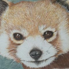 Excited to share this item from my shop: Cute Red Panda, Illustration nursery decor Panda Illustration, Stationary Gifts, Back To School Gifts, Color Pencil Art, Fluffy Animals, Red Panda, Colored Pencils, Nursery Decor, Terrier