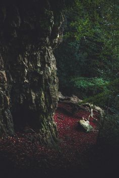 "freddie-photography: "" 'Darkness of the Forest No.1' Limited Edition giclee print of 10 available at: Artfinder.com/FreddieArdley By Freddie Ardley Photography Check out Freddie's: Instagram Facebook..."