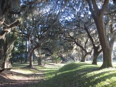 On St.Simon's Island there are five old oaks which have tree spirits carved in them by Keith Jennings.