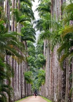 Rio : jardin botanique