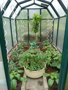 paprikapflanze im gew chshaus gew chshaus pinterest paprikapflanzen und g rten. Black Bedroom Furniture Sets. Home Design Ideas