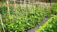 Image result for cheap plant stakes nz