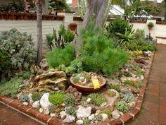 garten gestaltung wuestengarten idee sukkuelnten baum exotisch