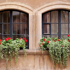 """Plectranthus Coleoides and red Pelargonium """" Mini Skirts by ..."""