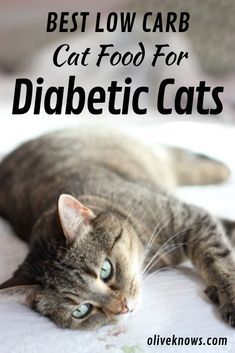 The 7 best low carb cat food options for diabetic cats are Feline Natural Grain Free New Zealand Chicken and Venison Canned Cat Food, Nom Nom. Canned Cat Food, Dry Cat Food, Cat Care Tips, Pet Care, Pet Tips, Diabetic Cat Food, Diabetic Tips, Cat Insurance